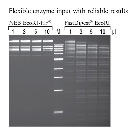 Flexible_Enzyme_Gel_M