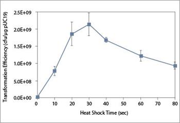 Pglo Plasmid on Genetic Transformation of E.Coli by Heat Shock Essay