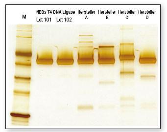 T4 DNA Ligase Gelbild