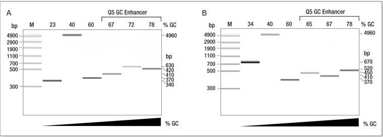 Q5 High Fidelity DNA Polymerase - New England Biolabs