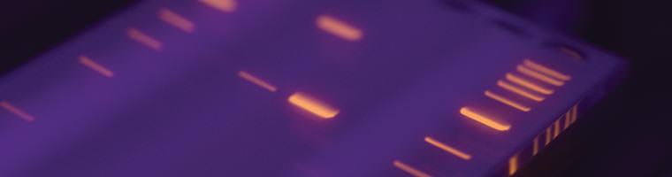 DNA Leitern Header