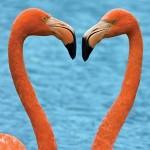 onetaq_flamingo